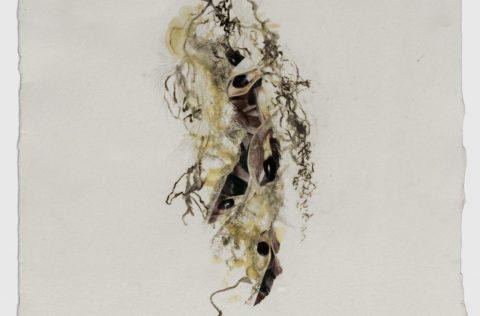 'Semillas II' - Carbonilla y collage s/papel 0,40 x 0,30