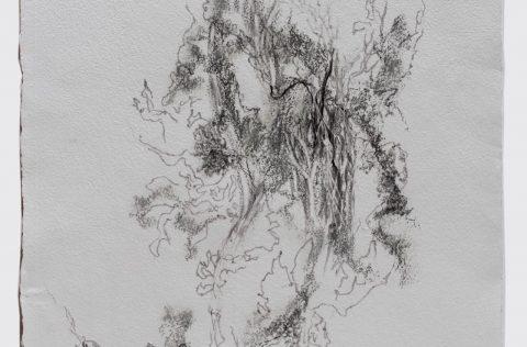 'Serie otras ramas…' - Carbonilla y grafito s/papel artesanal 0,90 x 0,70