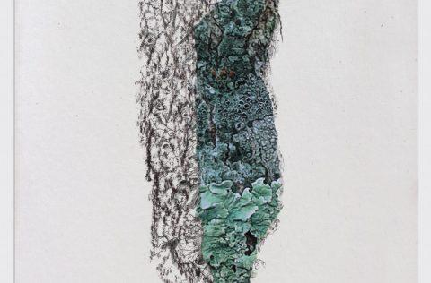 'Serie de cortezas y otras ramas…' - Técnica mixta 0,40 x 0,30